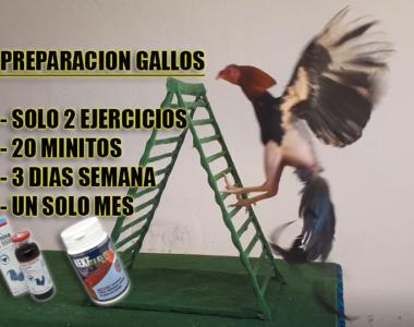 escalera gallos de pelea