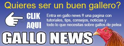 GALLO NEWS GALLOS DE PELEA