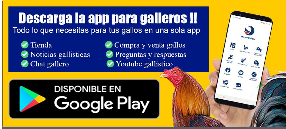 app gallos de pelea combatientes