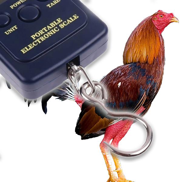 bascula gallos de pelea pesar gallos